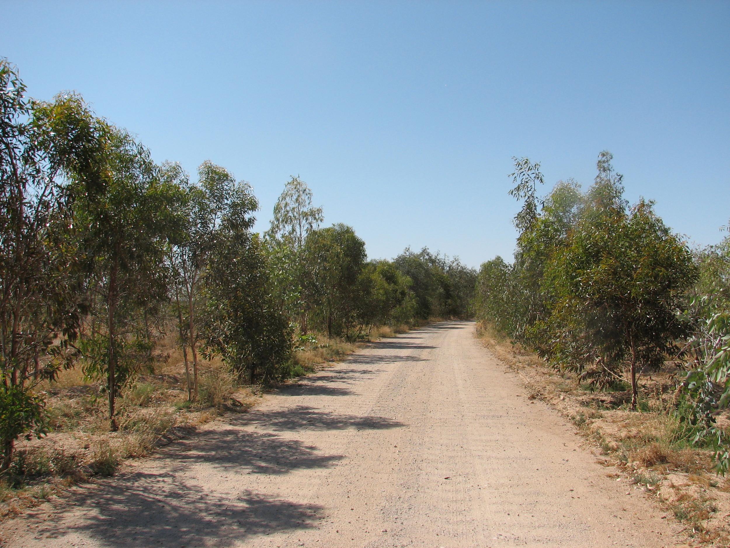 b DUNDAS MAGOGANY Walkabout Trail.jpg