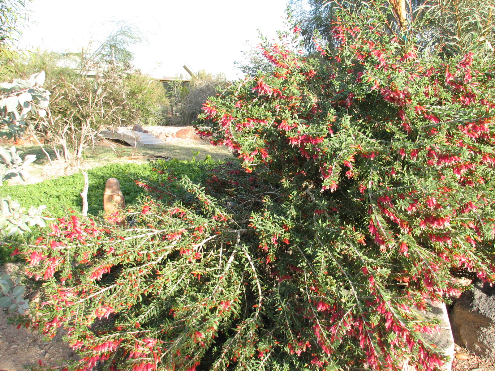 22 E. Outback Bushfire Homestead Garden.jpg