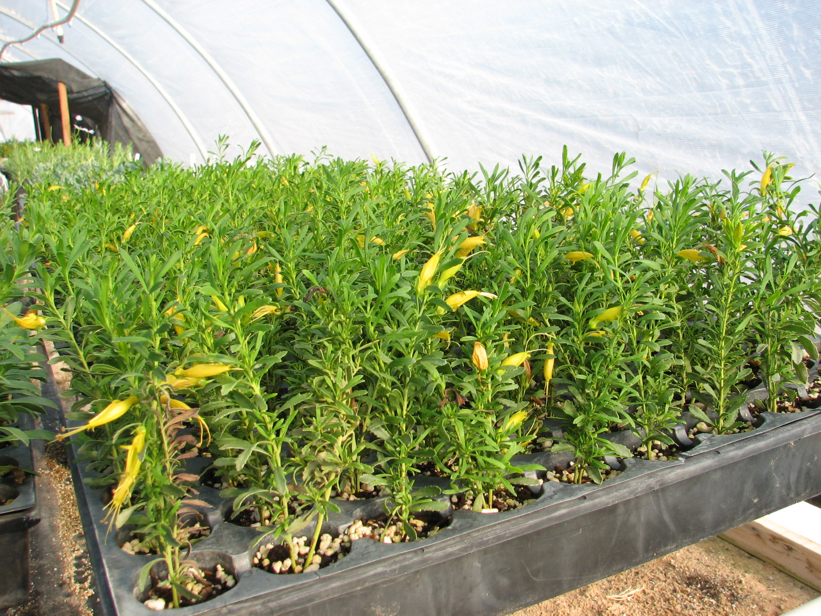 23 Outback Sunrise cell tray cuttings.jpg