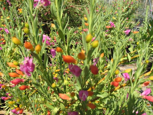 24 EASTER EGG Multi coloured flowers - Spring..jpg