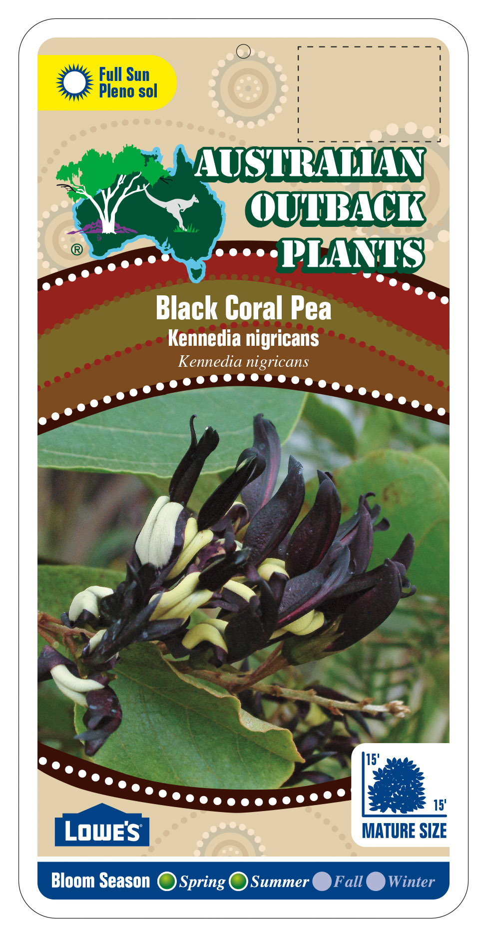 392198_FRONT-Black-Coral-Pea.jpg