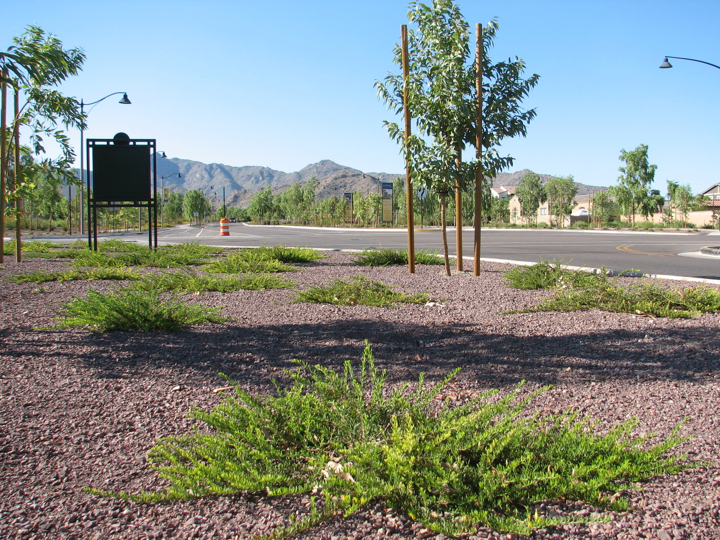 23 E.OUTBACK SUNRISE Verrado Way.jpg