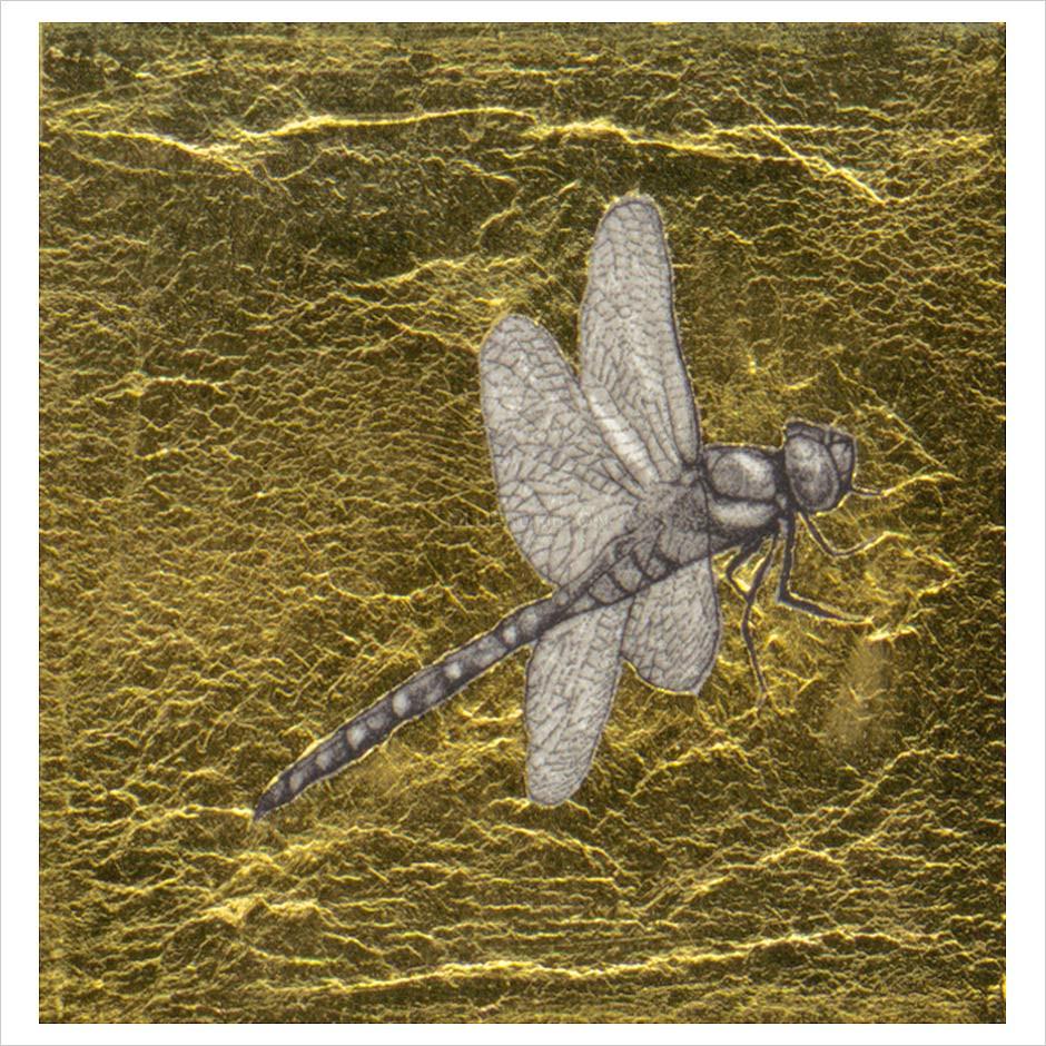 GYA-XXAG-Dragonfly.jpg