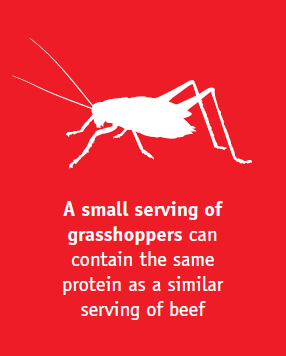Insects (1).png