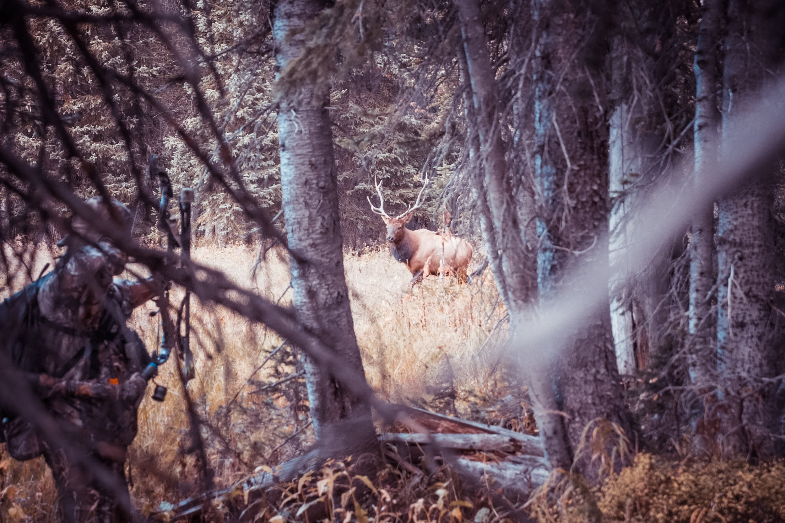 Elk Kill.00_00_27_22.Still004.jpg