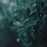 Ada dewy green leaves.