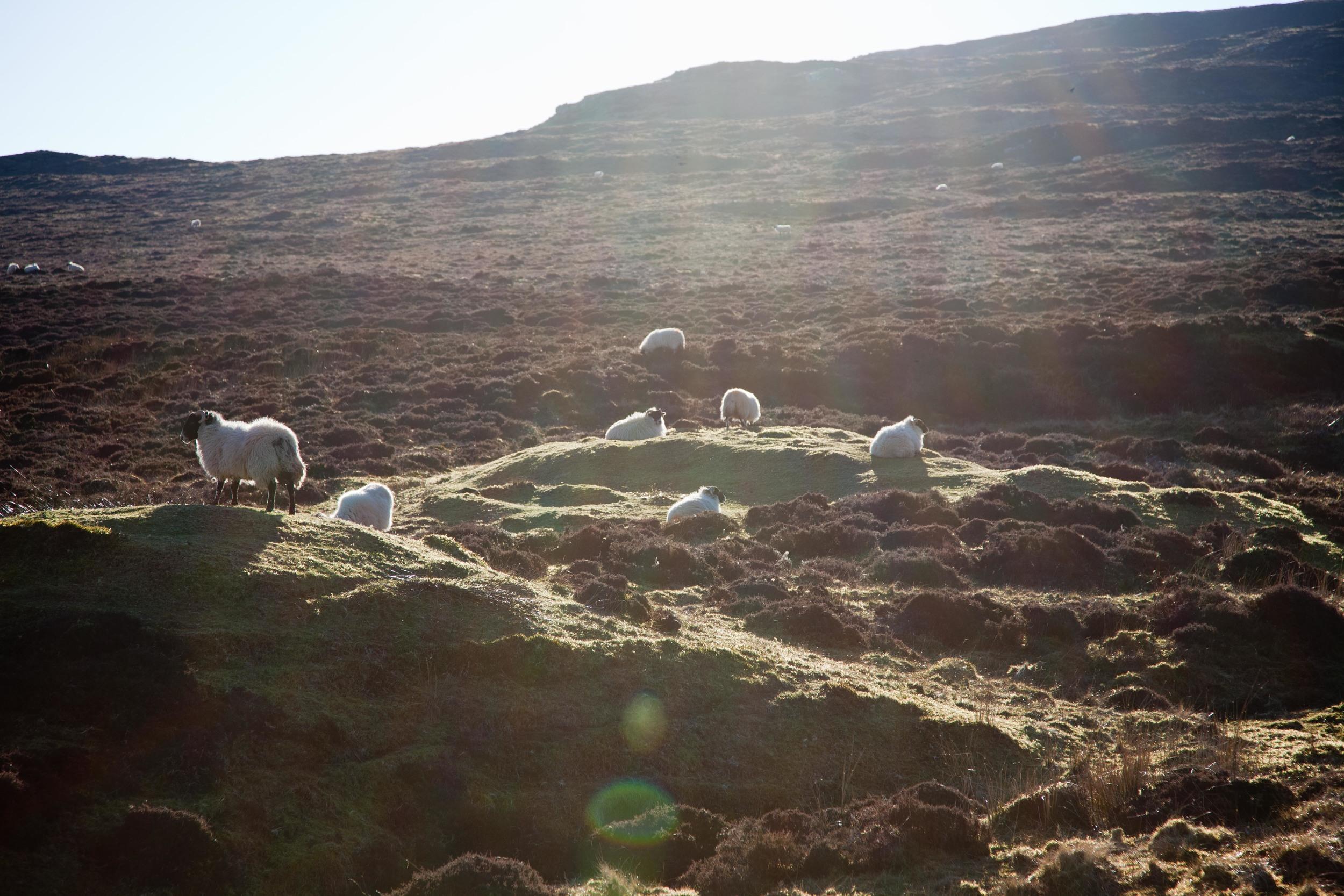 Typical scenery on Skye