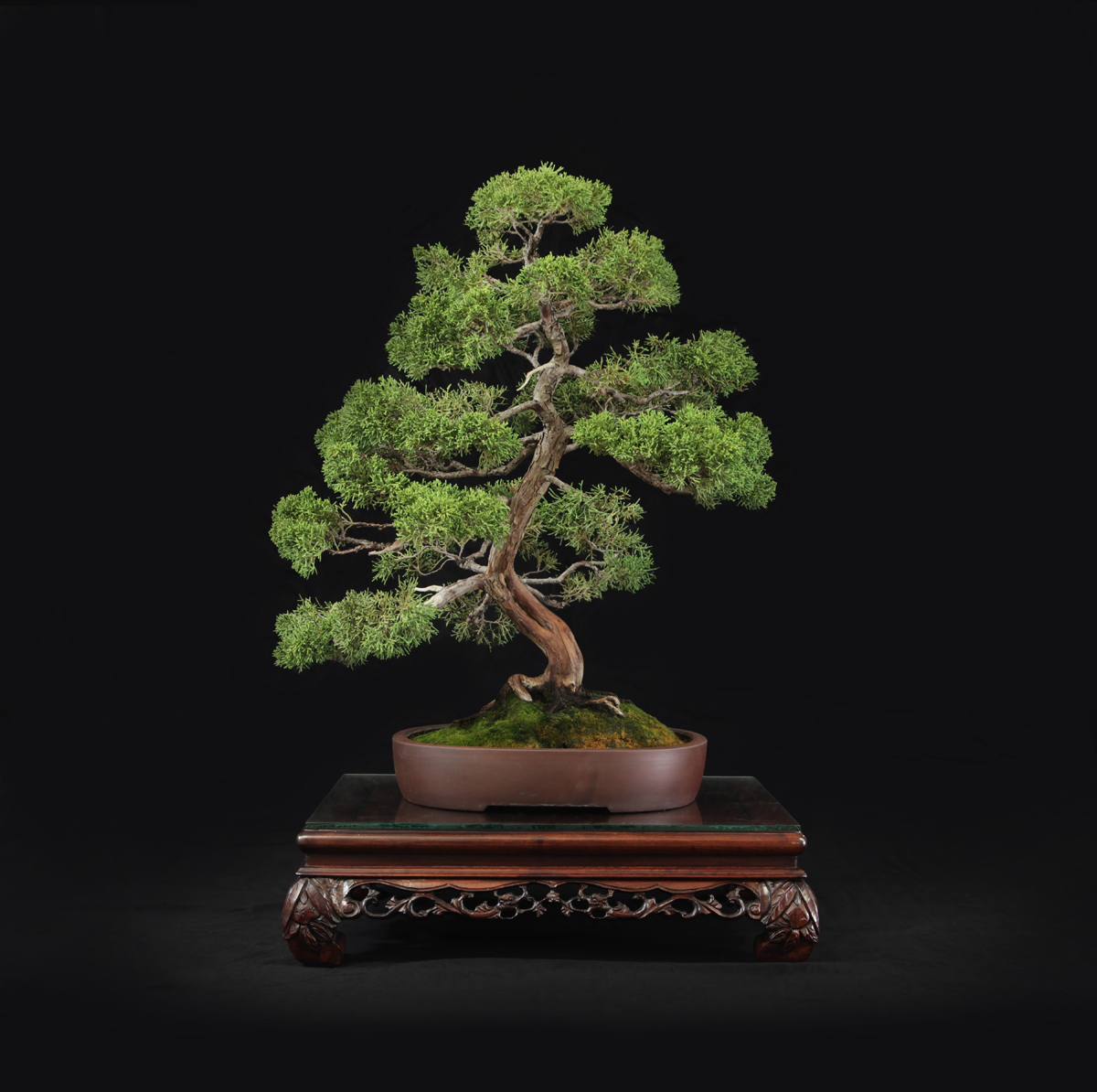 BONSAI BOWERS 2014  017 copy.JPG