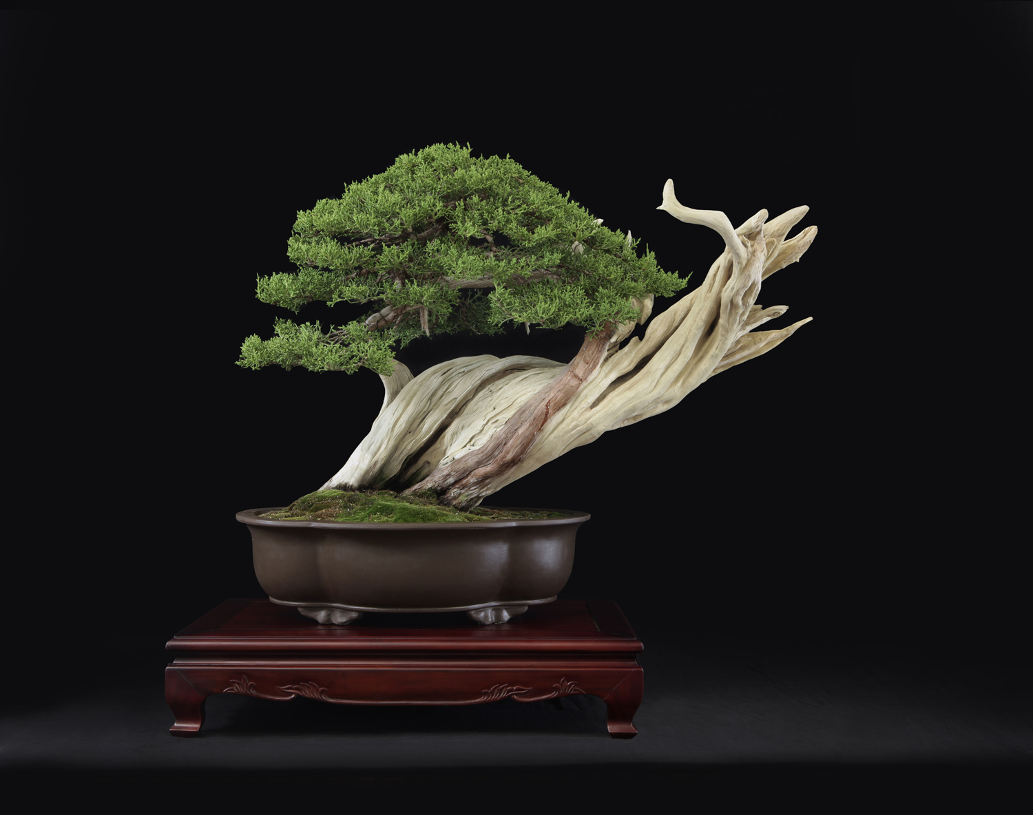 BONSAI BOWERS 2014  020 copy.JPG