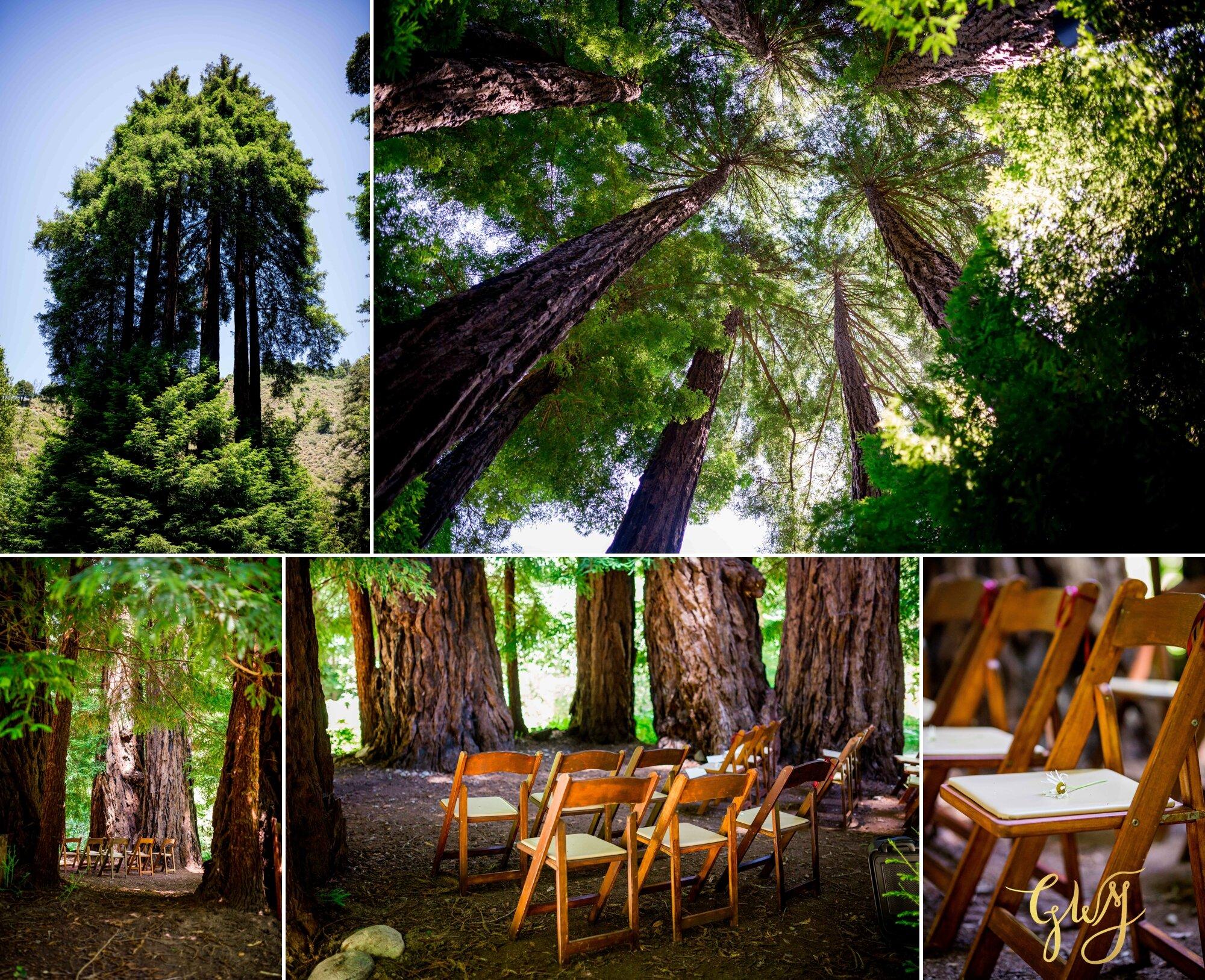 Casey + Jordan's Intimate Big Sur Elopement in the Redwoods by Glass Woods Media 30.jpg