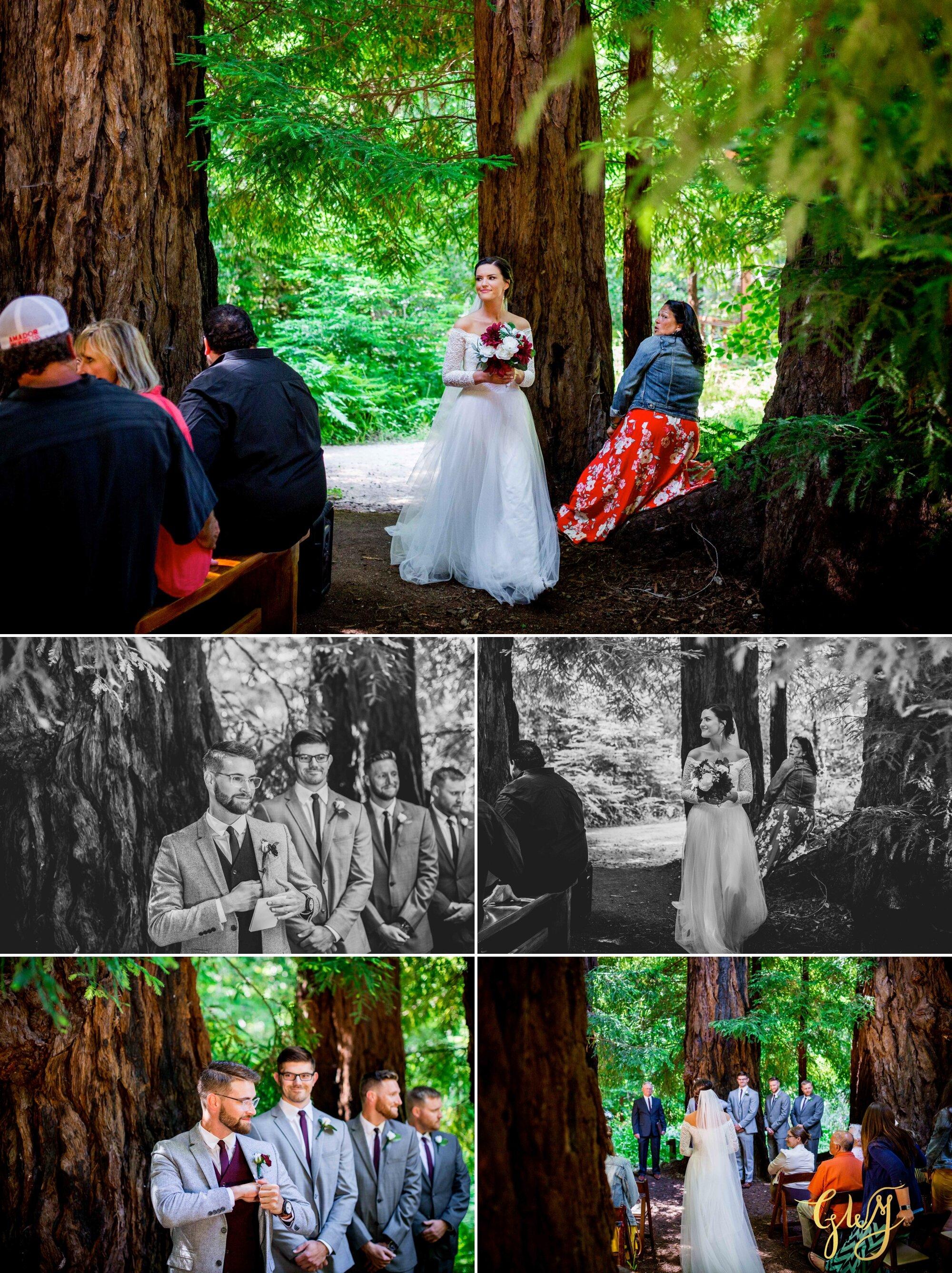 Casey + Jordan's Intimate Big Sur Elopement in the Redwoods by Glass Woods Media 32.jpg