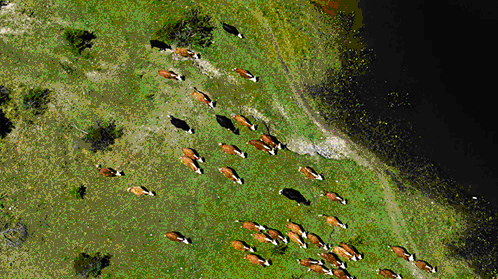 Cattle Ranching.png