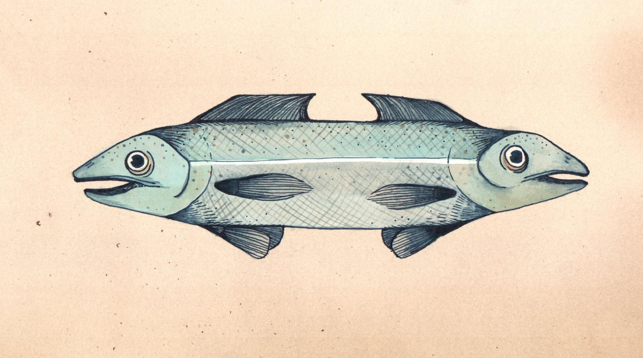 doublefish.JPG