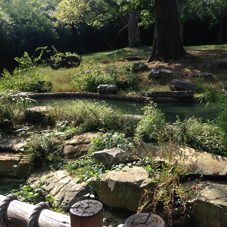 The Tapir habitat