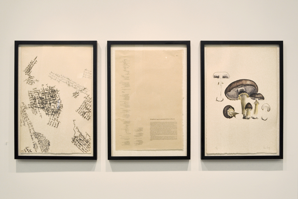 Plate II of Mushroom Book , John Cage with Lois Long and Alexander H. Smith, 1972. © John Cage Trust at Bard College