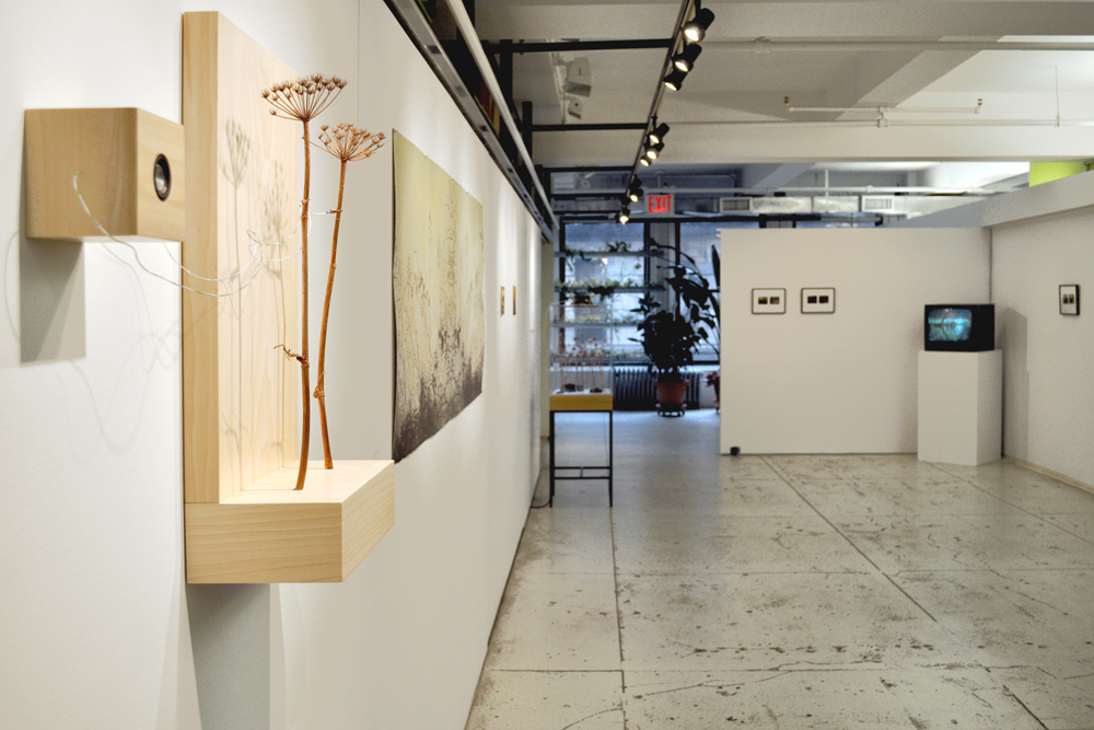 Installation view: Saul Becker & Stephen Vitiello,  Field Recordings , The Horticultural Society of New York, May 9 – July 6, 2012.
