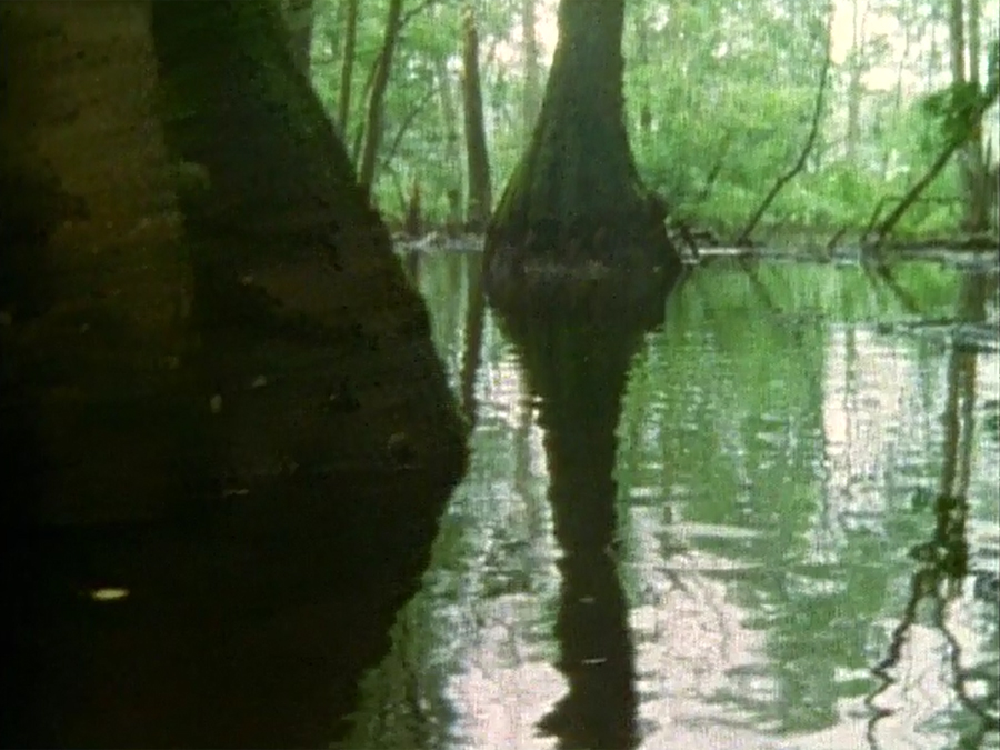 Still from: Stephen Vitiello and Matt Flowers,  Lost Forest , 2007, Super 8 film transferred to DVD, 4:41.