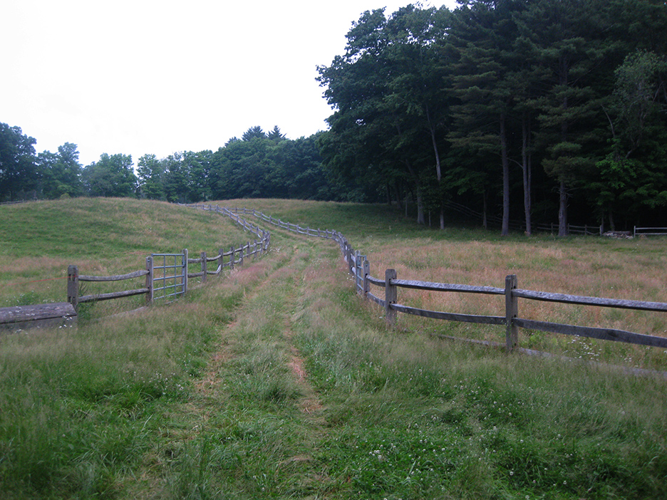 Fences_2.jpg