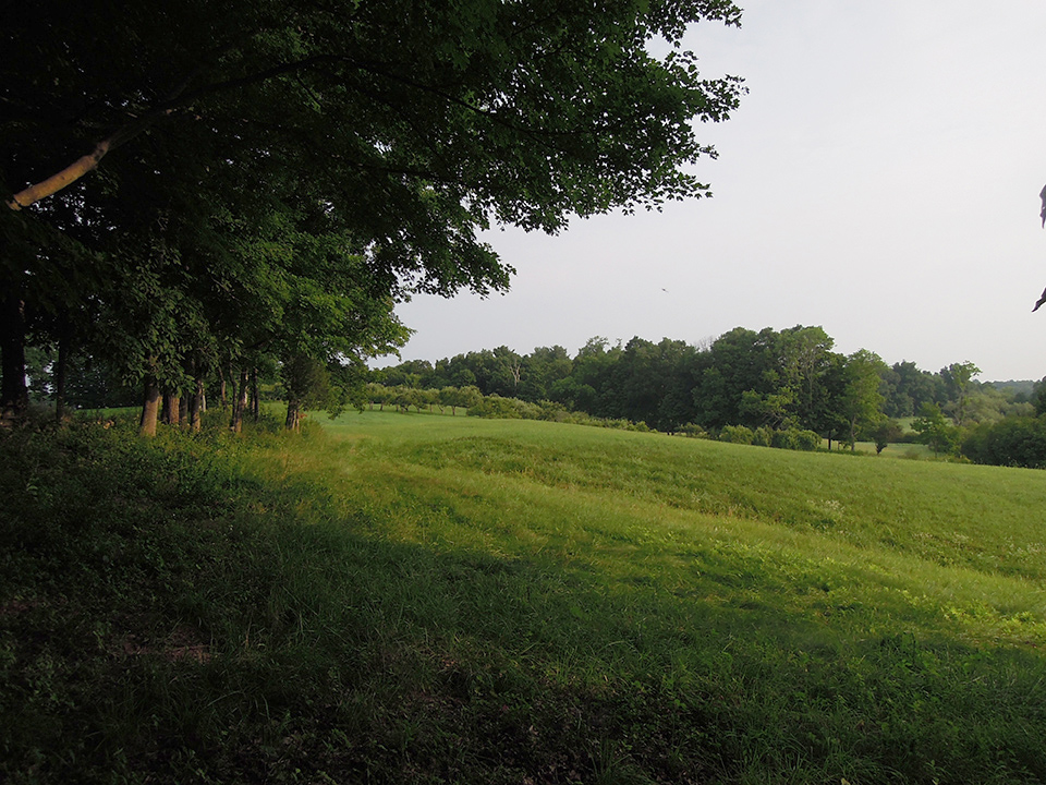 Field_2.jpg