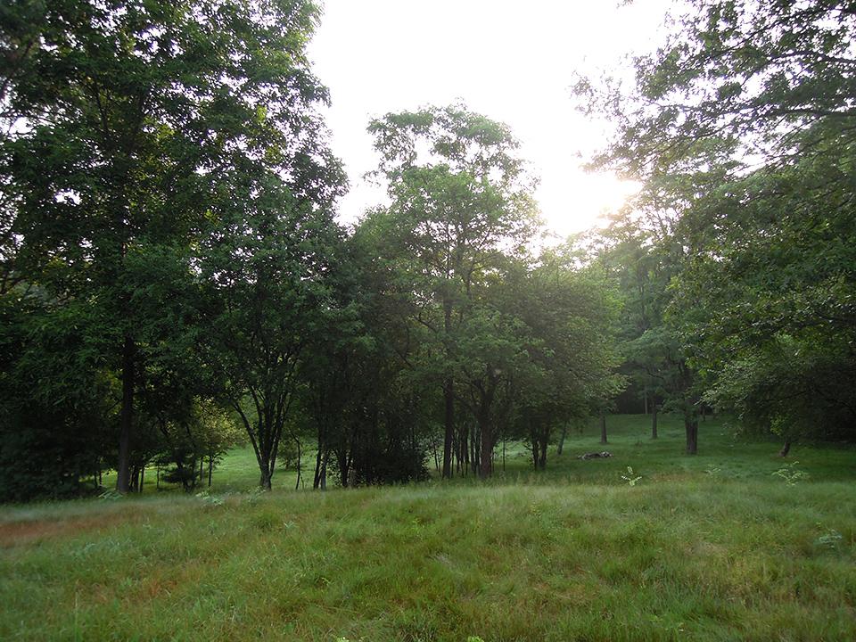 Meadow_2.jpg