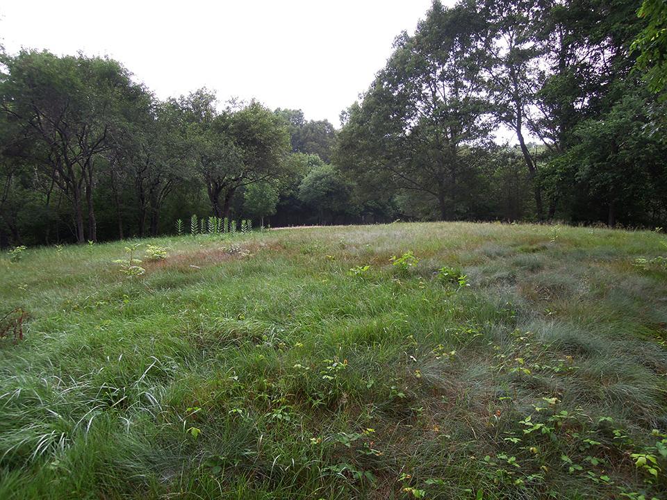 Meadow_13.jpg