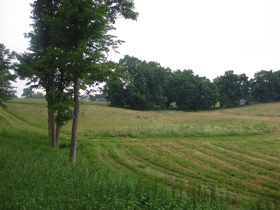 Meadow_14.jpg