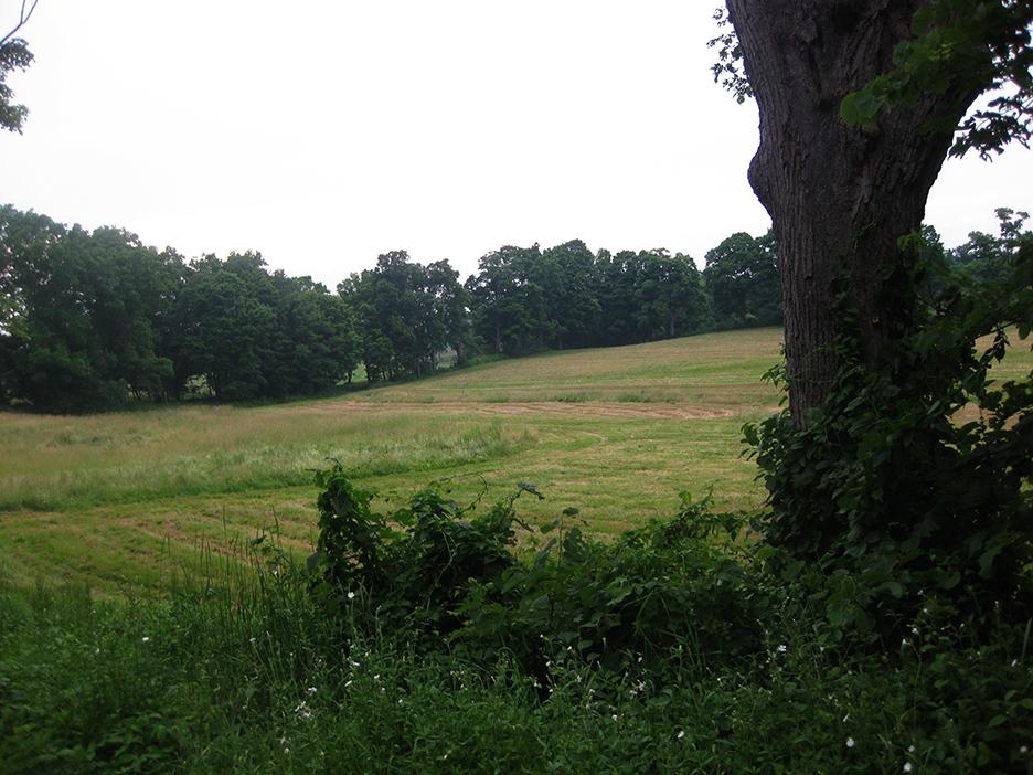 Meadow_16.jpg