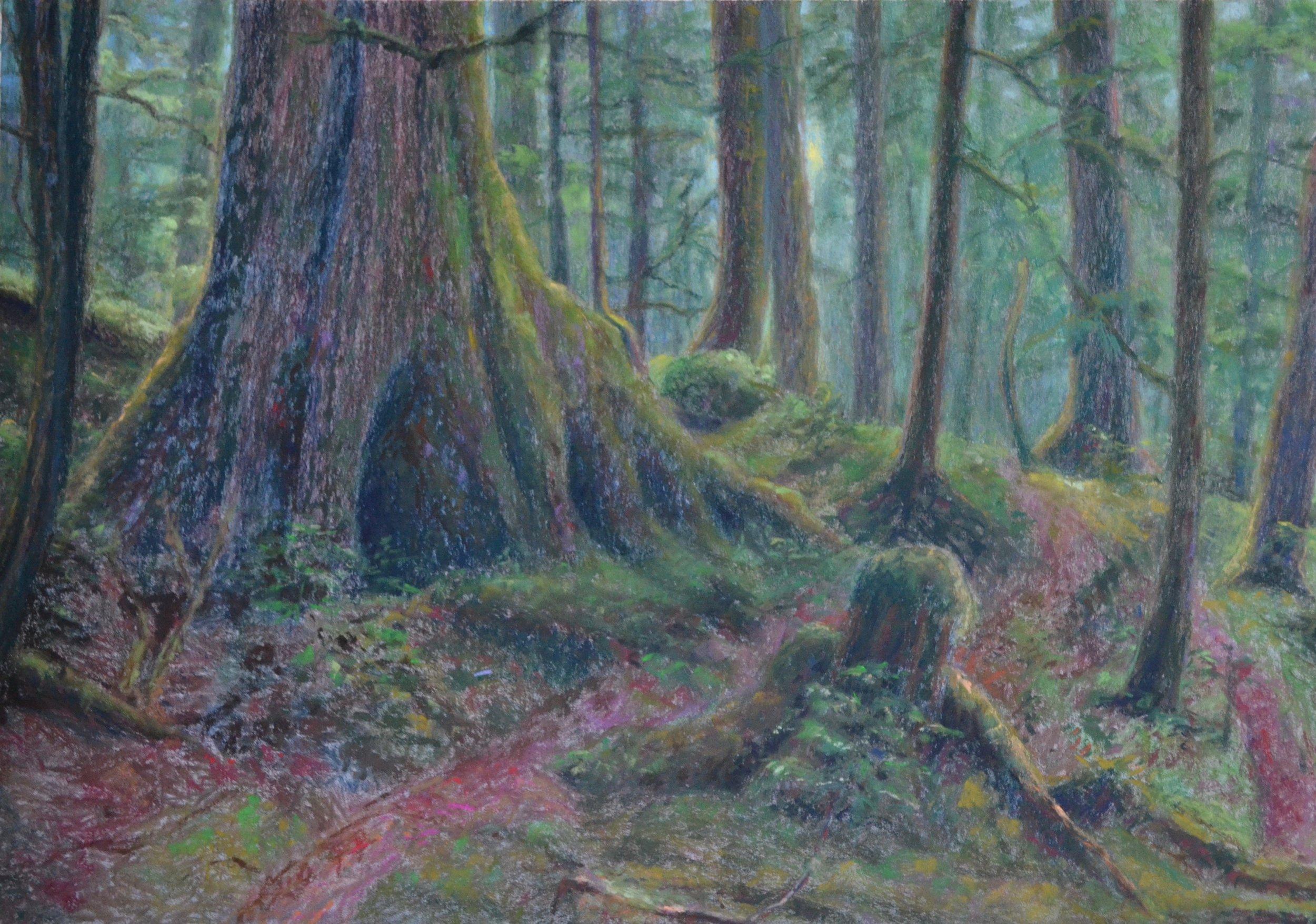 "Anja Karisik, ""Old Growth, Haida Gwaii"", pastel on paper, 18.5"" x 27"""