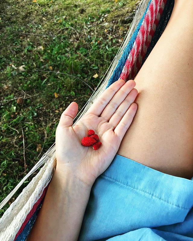 Wild strawberry medicine 4 u 🍓