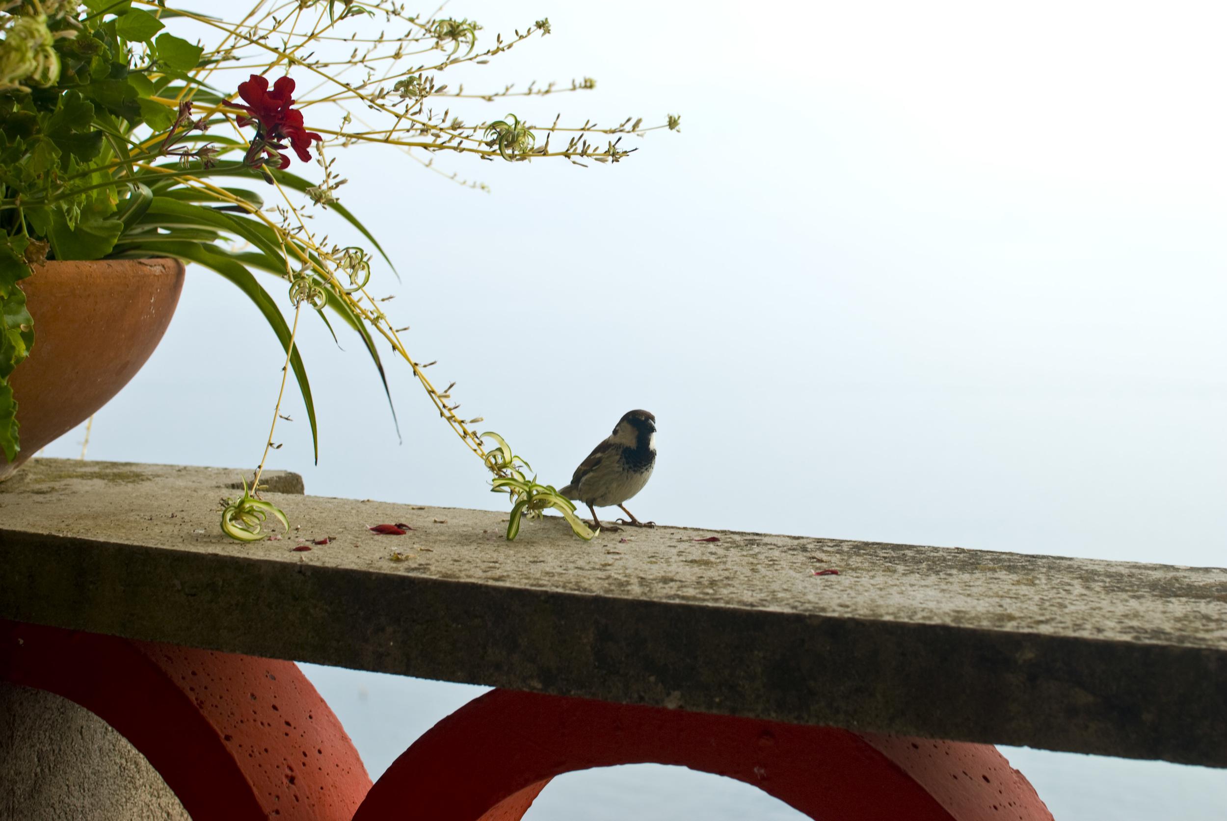 birdie_4798998815_o.jpg