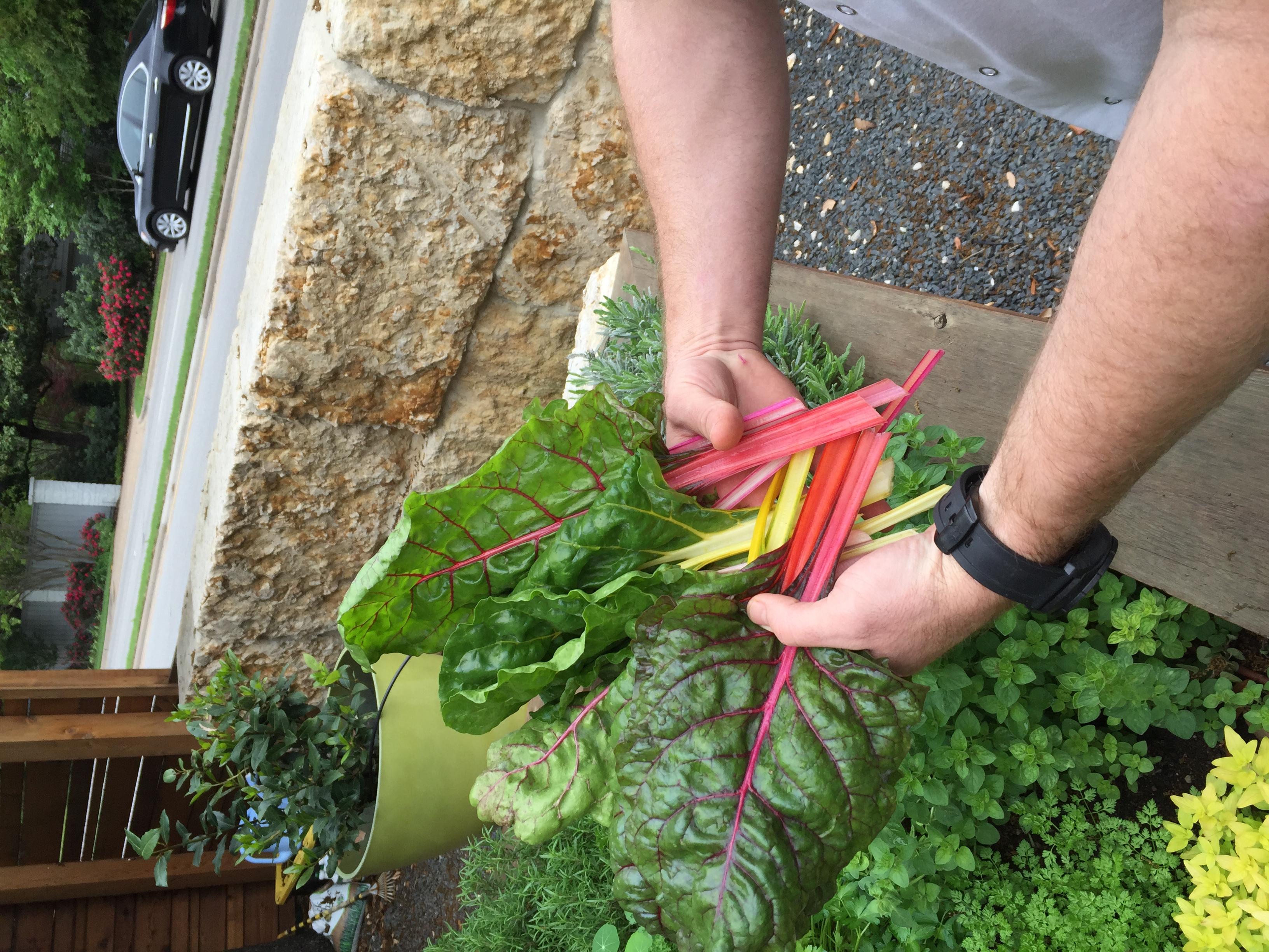 Shinsei Restaurant | Rathbun Organic Garden - Swiss Chard