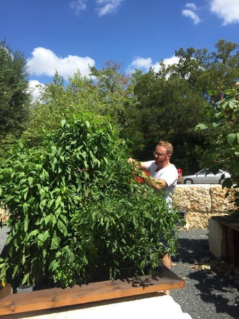 rathbun-garden-sept-16-01.jpg
