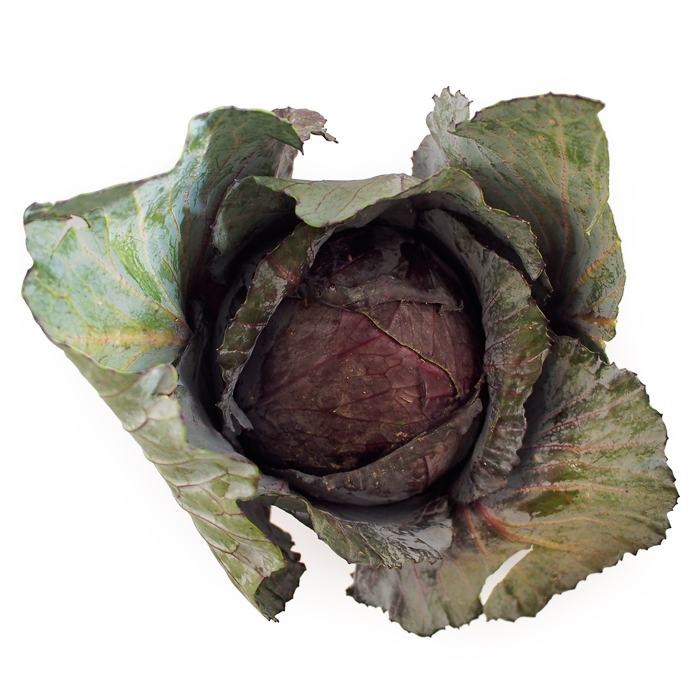 Red Cabbage.jpg