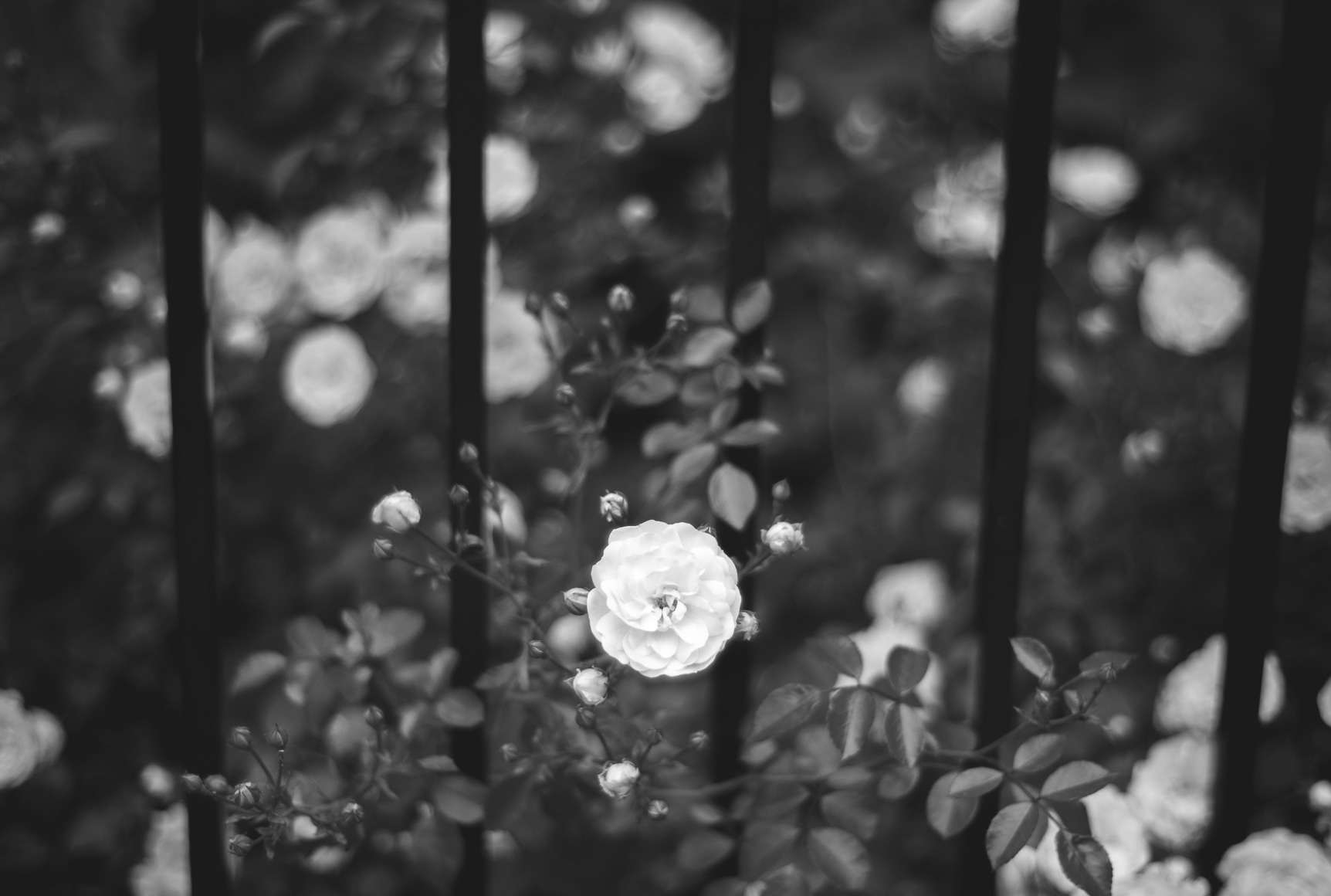 Leica M8.2 | Voigtlander Nokton 40mm f/1.4