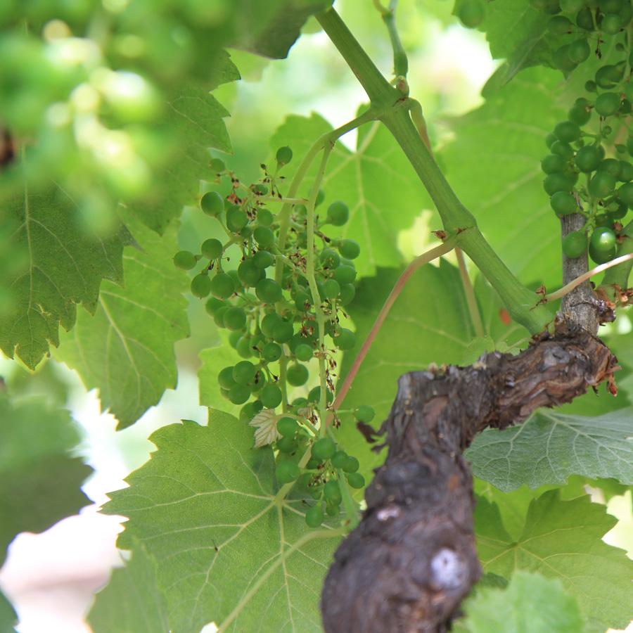 2.California.wine country (1).JPG