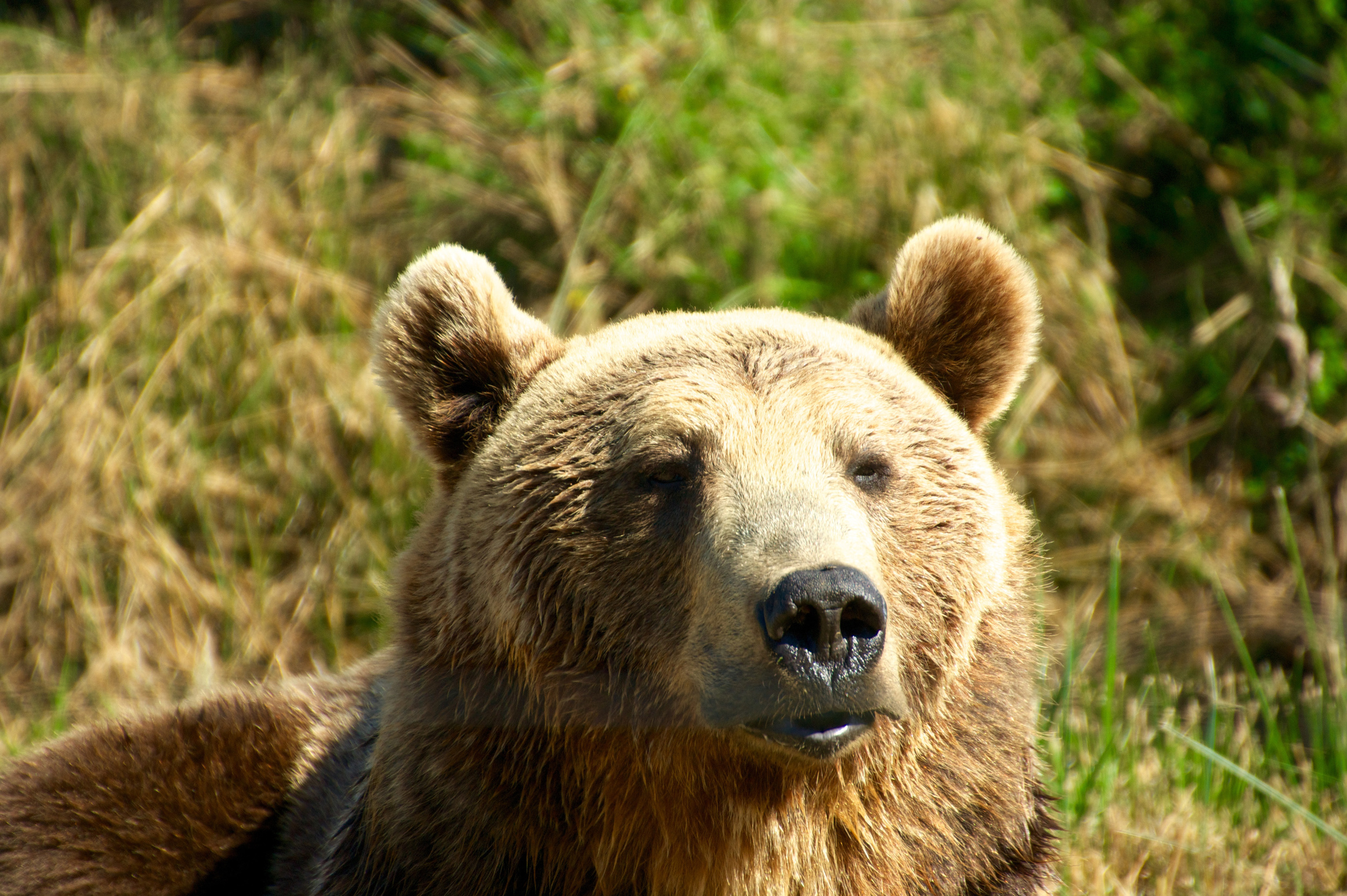 Fluffy brown bear...they must have been so hot