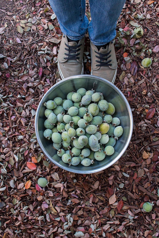 guava_hunting-4.jpg