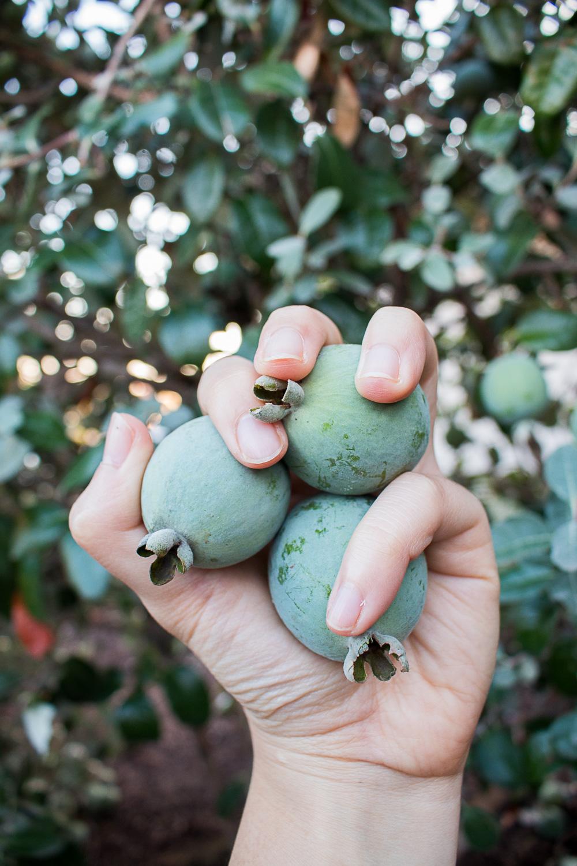 guava_hunting-10.jpg