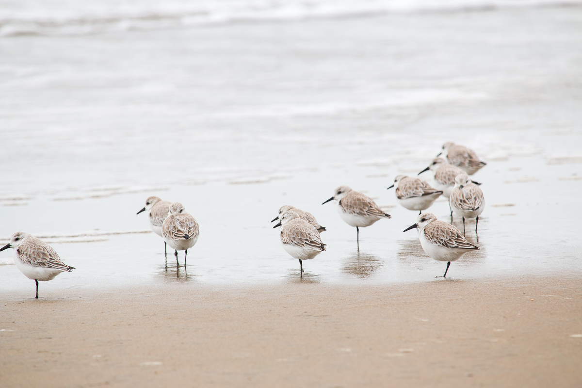 limantour-beach-6.jpg