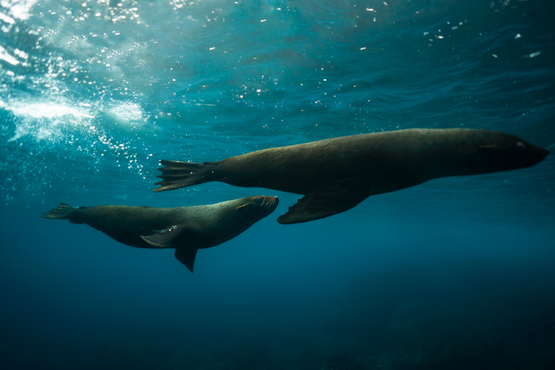 20170917_Galapagos_Islands456-3.jpg