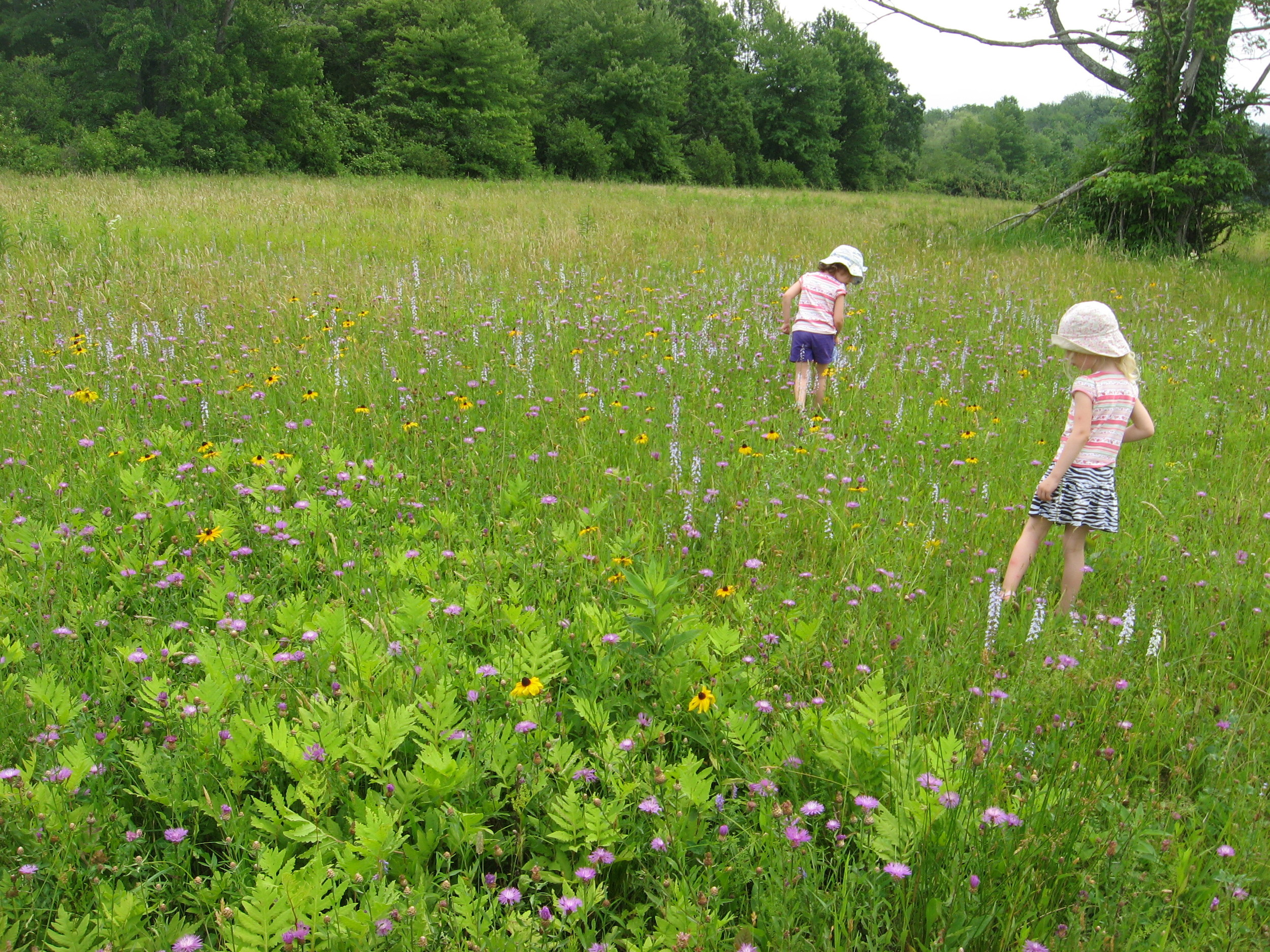 June 2013. The twins, making their way across one of our wildflower meadows.