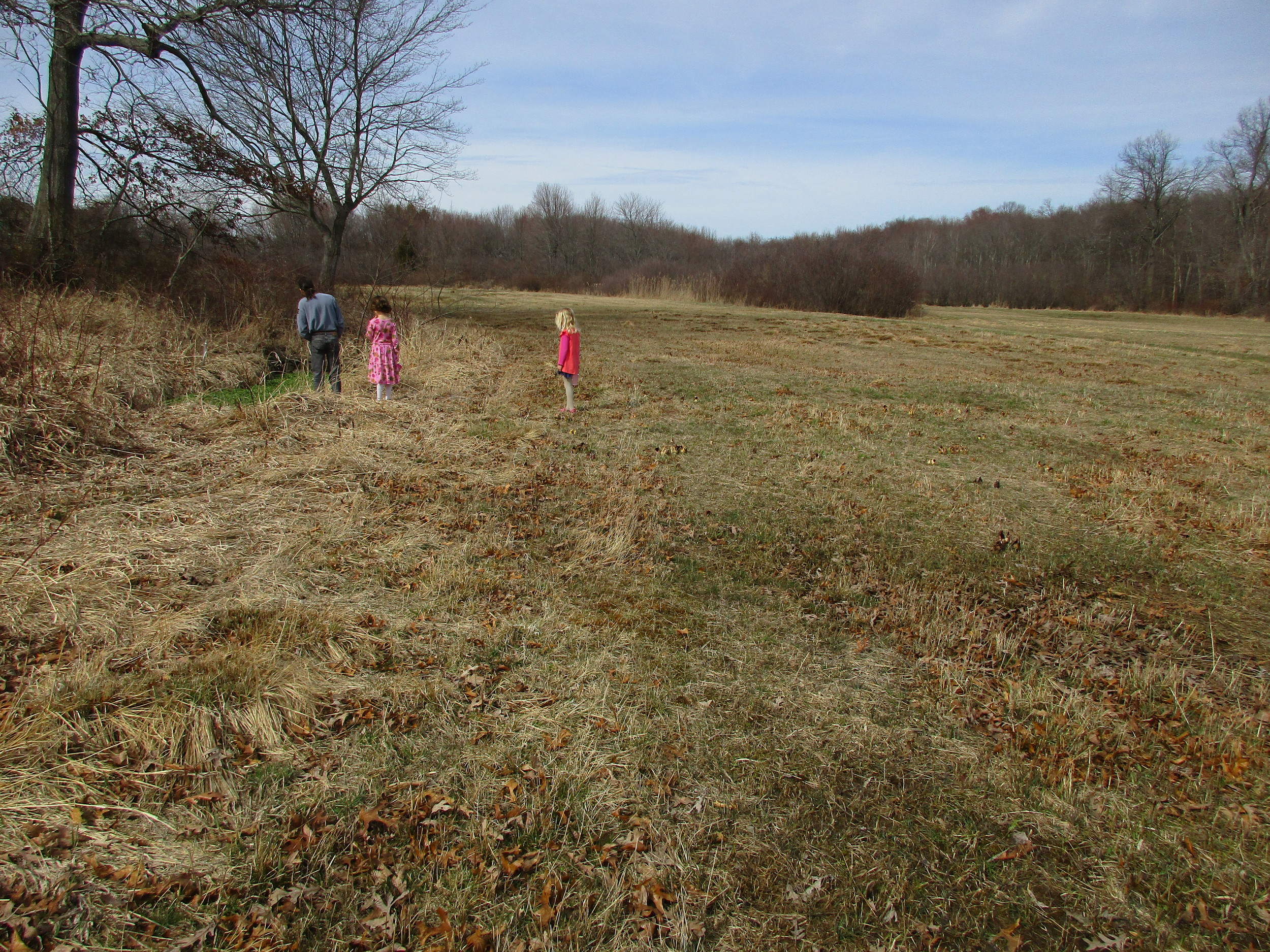 Sunday March 13th  There are quite a few skunk cabbage flowers in this field, especially along the right. Can you spot them? Somehow, the bees are able to find them with no problem! (Family checking out the spring)