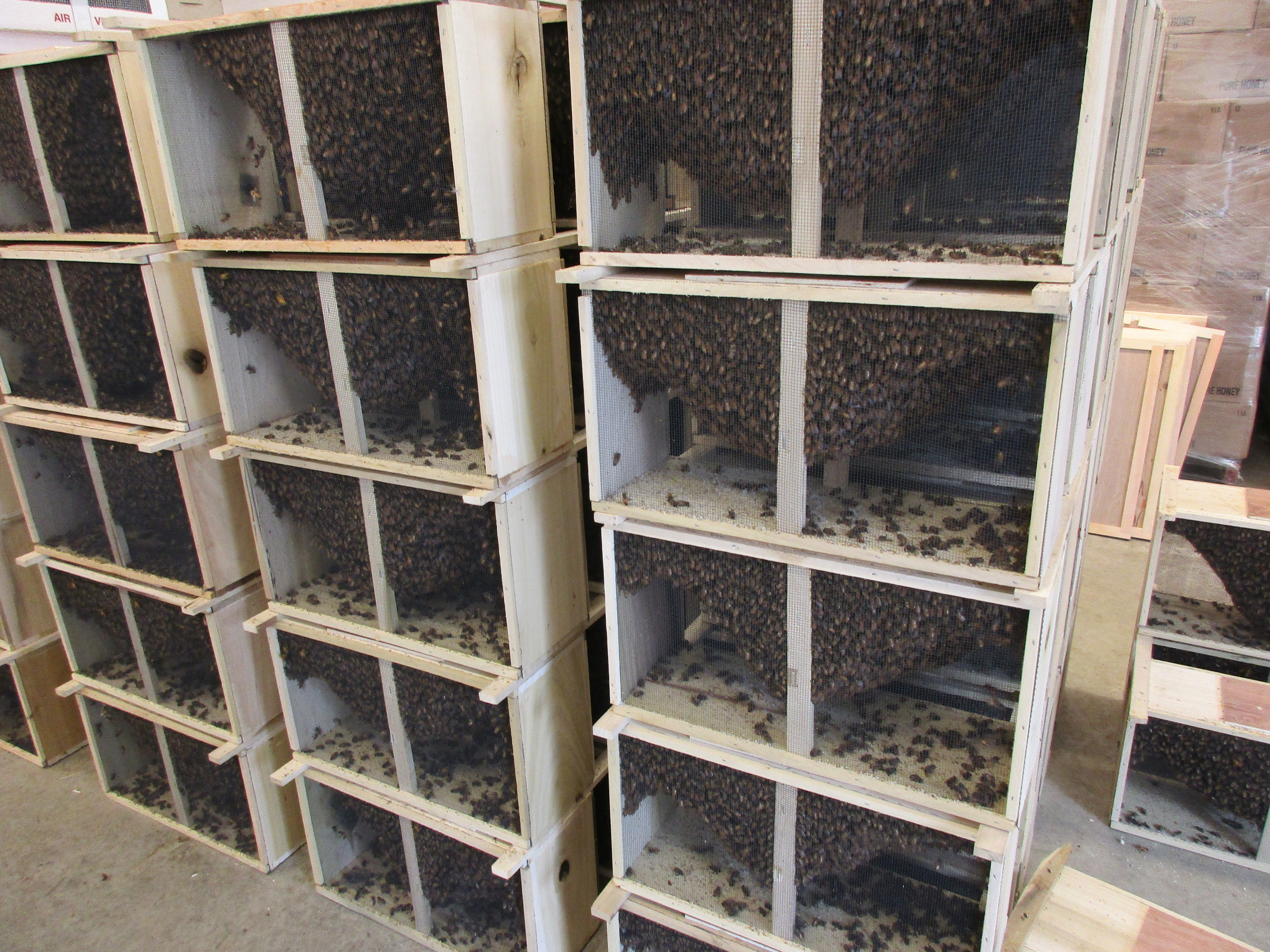 Stacks and stacks of bee packages....
