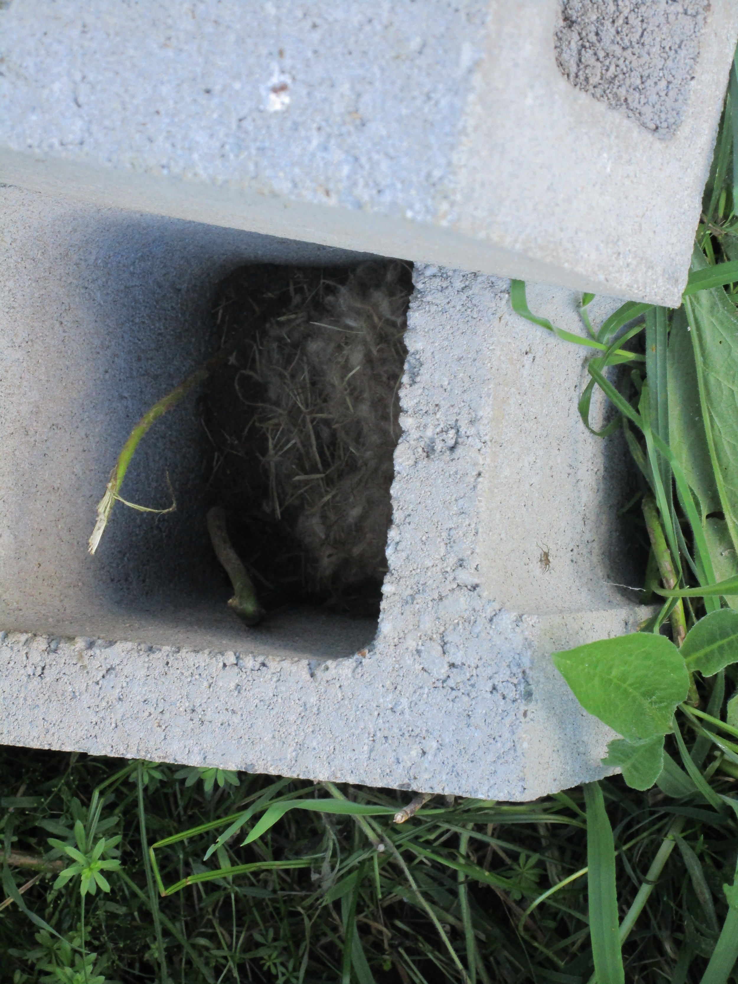 Mouse nest in the cinder blocks Hive 5 used to rest on.