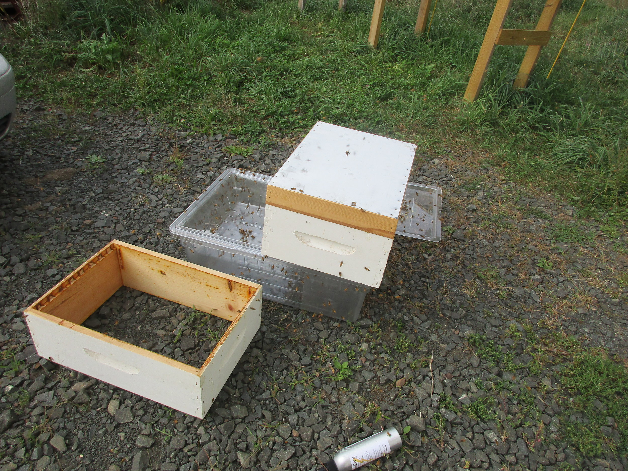 "A super sitting on the plastic processing tub in front of our garage, with the bee repellent board on top, in a vain effort to get the bees to leave. Bee repellent container on the ground in front. (A ""super"" is a hive box with frames like the boxes that make up the hive, but it is not as deep.)"
