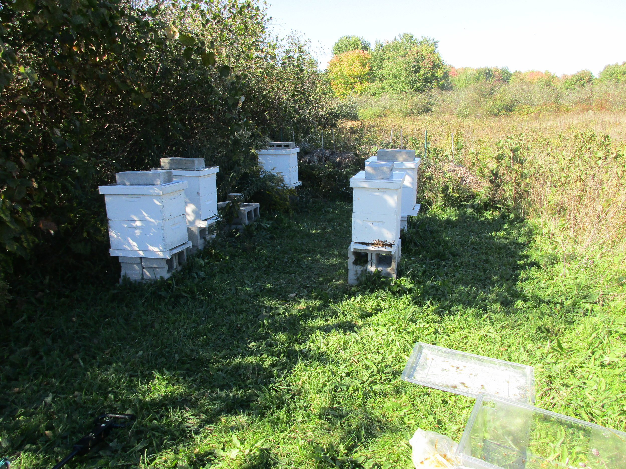 Hive 2, the one that is doomed, is the one at the back on the left.