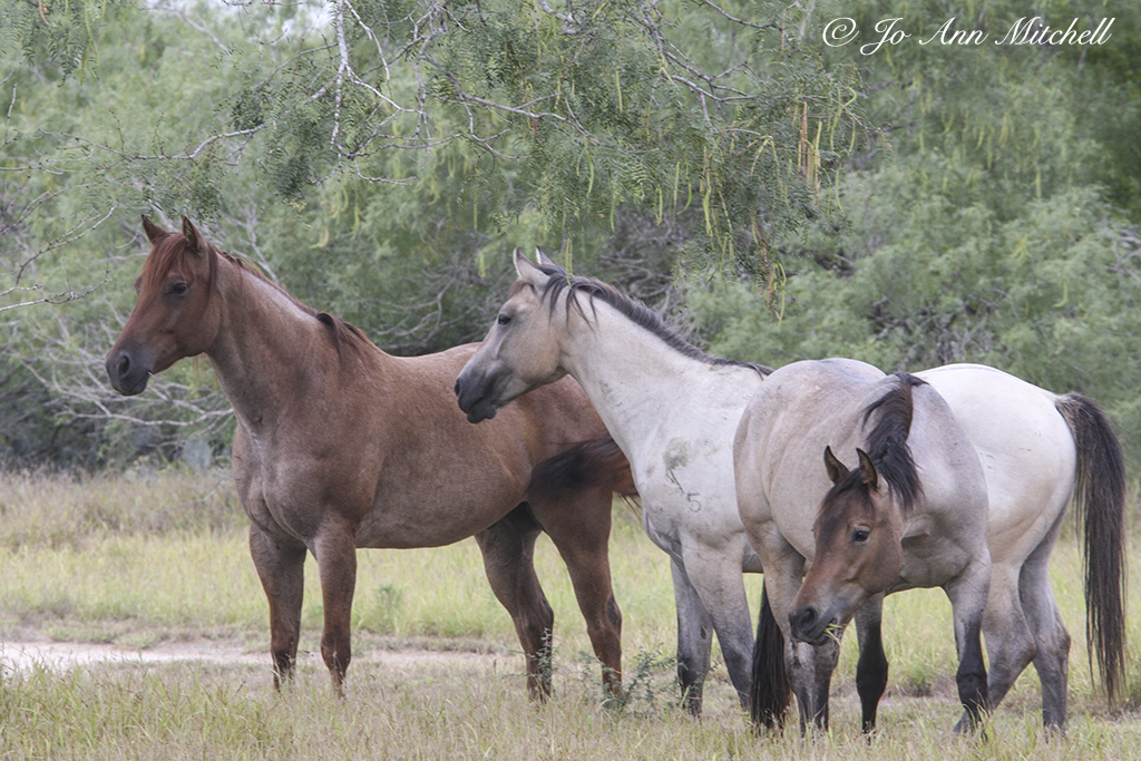 20140719_JonesAltaVista_Horses_1219_web.jpg