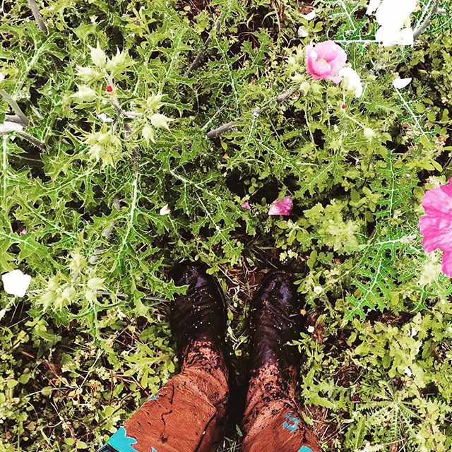 Morning dew on the Bull Thistle 🌸x🌵 • • • #ShootAV #jonesaltavistaranch  #ranchlife #cowboyboots #ostrichboots #wildlifephotography #cowgirl #cowboy #cowgirlboots
