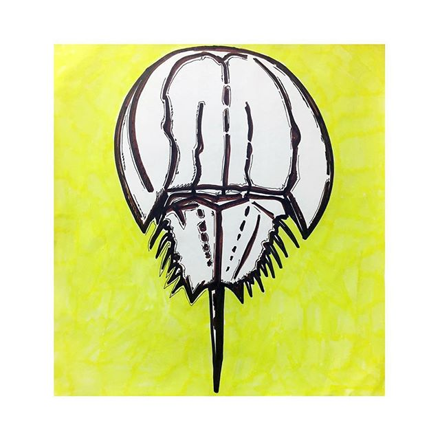 """Horseshoe Crab Painting #357/365, pen, whiteboard marker, and highlighter on paper 12"""" x 12""""."""