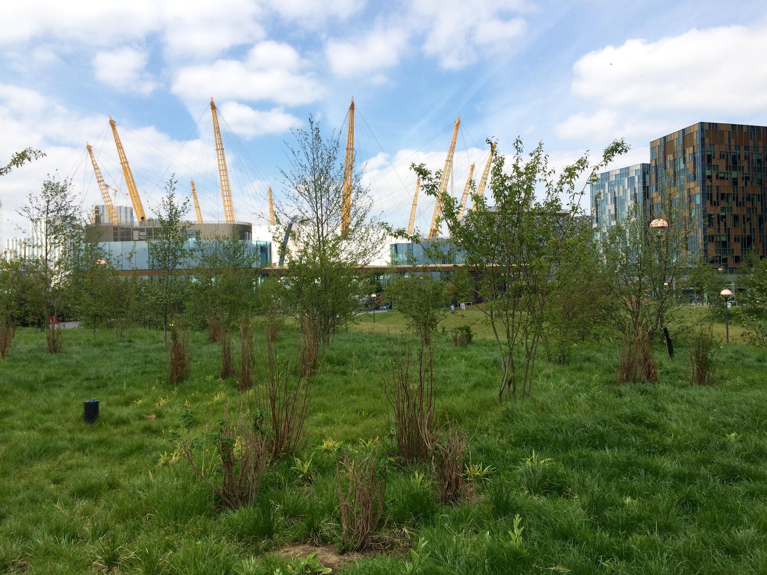 Peninsula Garden on the Greenwich Peninsula -  June 2015  [greenpenlondon]